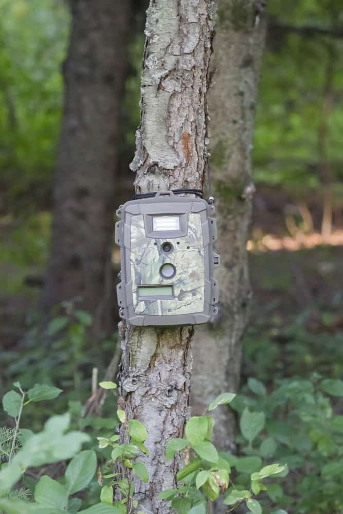 Improving the success rate of using your trail camera