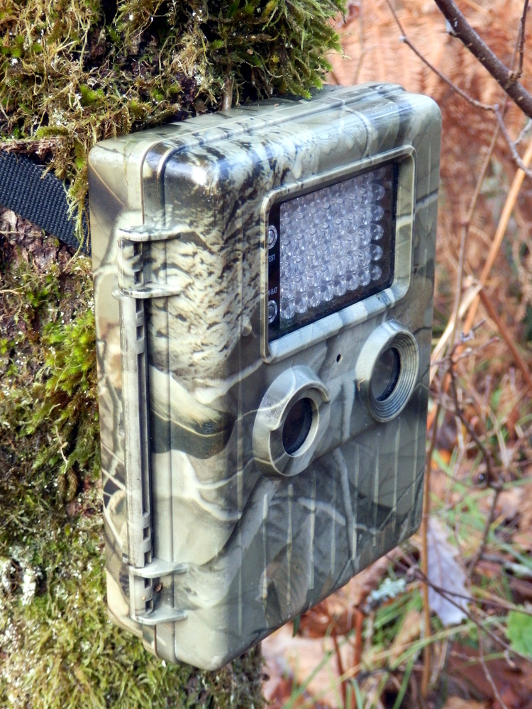 Tips to improve the success with your trail camera