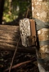 Showing a trail camera mounted on a tree. Mounting it high will improve your success rate!