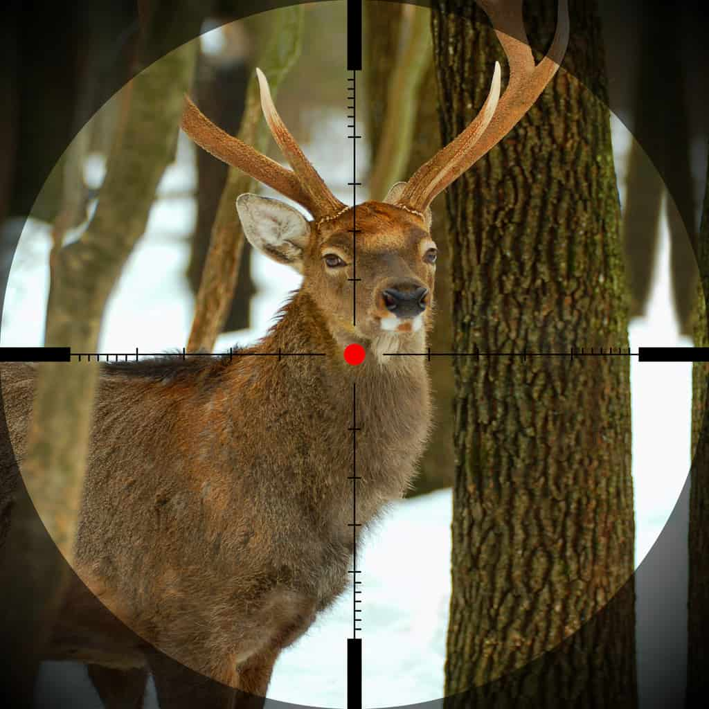 Large mature buck in reticle